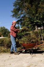 gathering, cuttings, garden