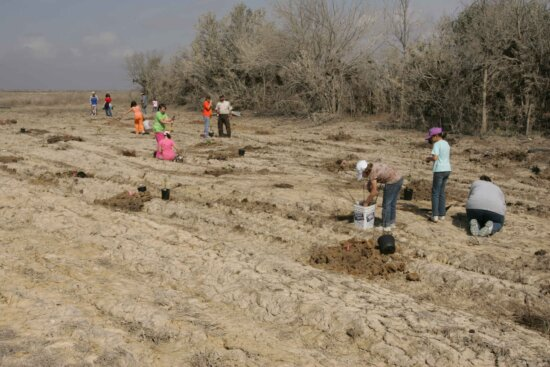 girl, scouts, help, employees, replant, trees