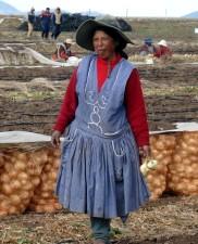 lokale, Produzenten, neigen, Getreide, Bio, süß, Zwiebeln