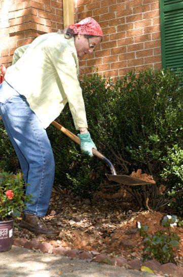 pelle, creuser, petit trou, hangar, plante, jardin
