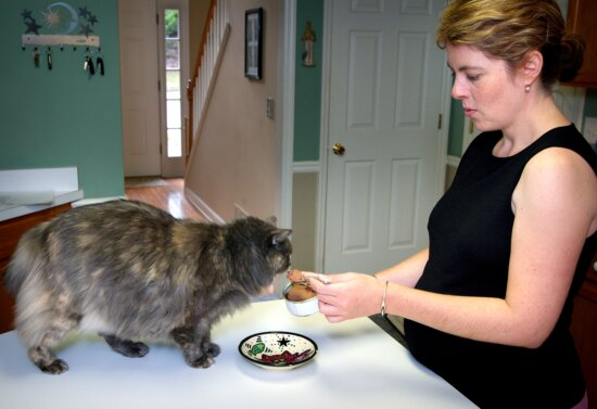 woman, feeding, cat, home