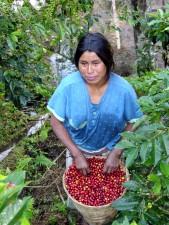 femme, la récolte, le café, les haricots
