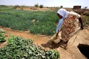 woman, irrigates, crops, Kabkabiya, camp, Darfur