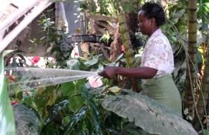 woman, irrigating, nursery, irrigation, pump, Tanzania