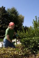 femme, travail, découpage, herbe, arbustes, jardin
