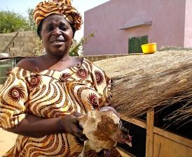 woman, chicken, education, vaccination, plan, Senegal