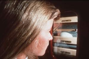 women, checking, egg, incubator