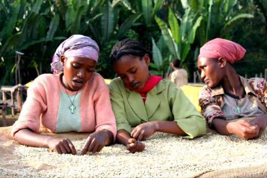 women, coffee, farmers, Ethiopia, sort, coffee, beans, higher, quality, specialty