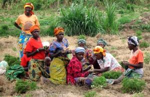 women, harvesting, geranium, plants, hope, distill, oil, sell, international