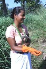las mujeres, los ingresos, la cosecha, limón, hierba, se aclaró, porciones, bosques, tierras