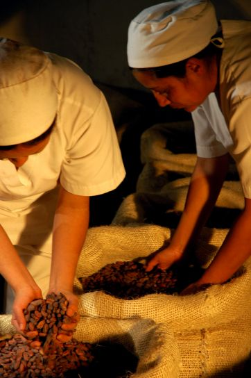 women, sorting, coca, beans, Ecuador