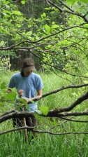 giovane femmina, foglie verdi