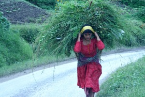 young woman, carrying, collection, greenery, Nepal