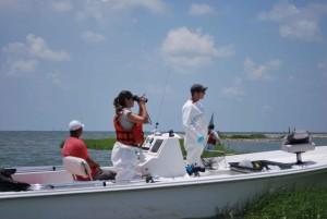 visserij, biologen, zoeken, vogels, snelle, boot