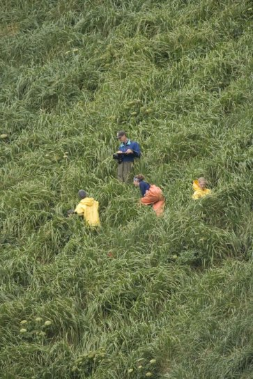 four, people, tall, grass, steep, slope