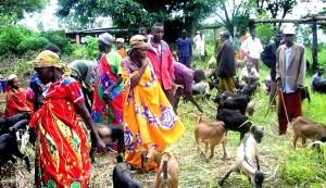 goat, farming, goats, nutritional, valuable, goat, milk, goat, cheese