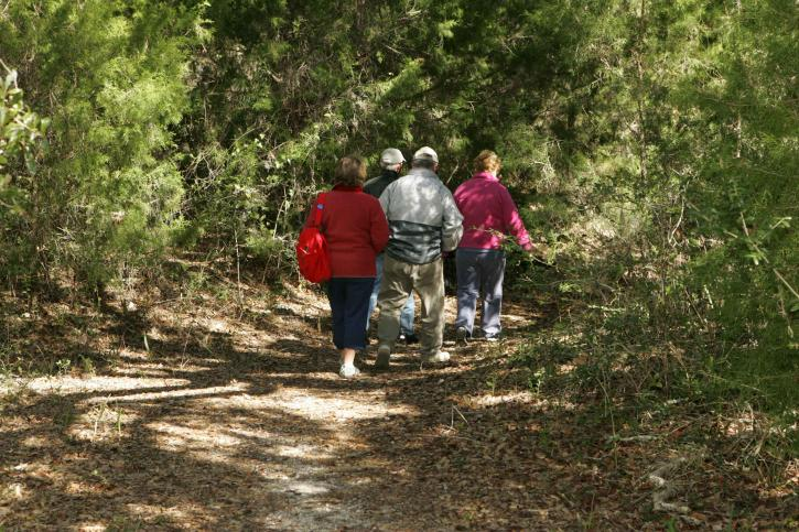 hikers, enjoy, hike, wild, trail