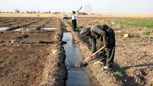 kurdish, les agriculteurs, le travail, la terre