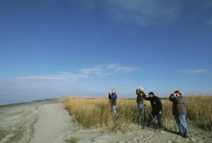 Grupa, czterech mężczyzn, birdwatch, piaszczysta, Brzeg