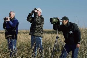 groupe, hommes, position, oiseau, regarder, faune, photographe, nature
