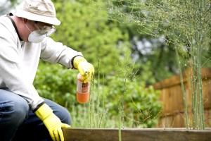 reading instructions, man, pesticide spray