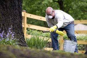 applying, fertilizer, base, one, hardwood, trees, read, instructions
