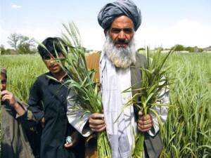 Balochistan, rolników, rolnictwo, pola, Pakistan