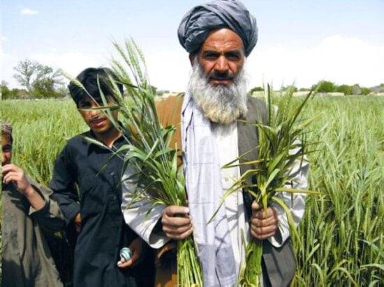 balochistan, farmers, agriculture, fields, Pakistan