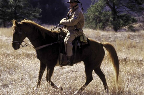 cowboy, horse, grazing
