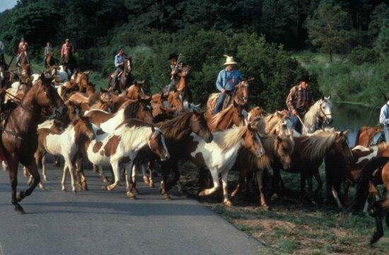 cowboys, horses