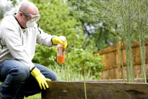 details, image, man, gardening, garden