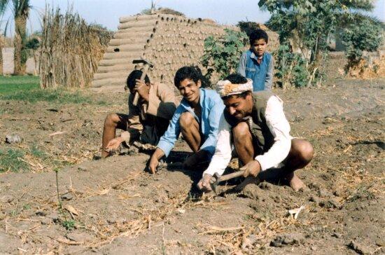 egypt, farmers, field