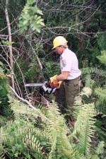 employee, chain, sawing, control, exotic, invasive, melaleuca