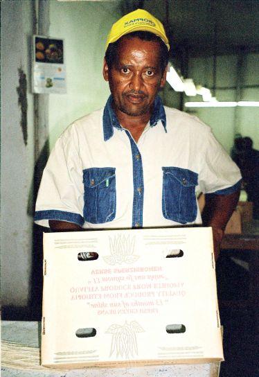 ethiopian, homme, présentoirs, emballages, boîtes, magasin, vert, les haricots, l'exportation, l'Europe