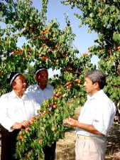 farm, owner, appraises, apricot, harvest, farm, personnel