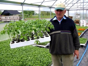 農夫、近代化、温室効果、成長した苗