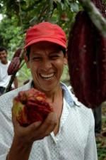 farmer, admires, size, cacao, bean, Ecuador