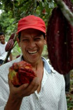 contadino, ammira, dimensione, cacao, fagioli, Ecuador