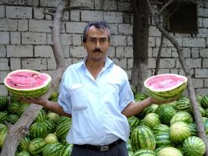 farmer, navigates, tricky, watermelon, market, Azerbaijan