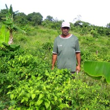farmer, walks, bull, nose, pepper, plants, Tuschen, Guyana