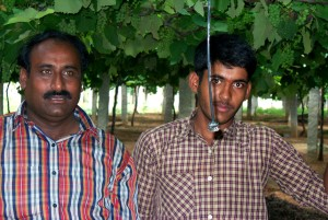 farmers, India, save, energy, money, switching, drip, irrigation