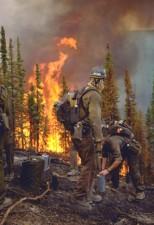 brandmænd, kamp, skov, brande