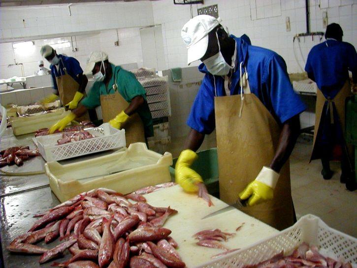 peces, exportador, Senegal, establecer, manejar, oleada, nueva