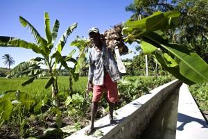 haitian, farmer, walking, drainage, canal, Haiti