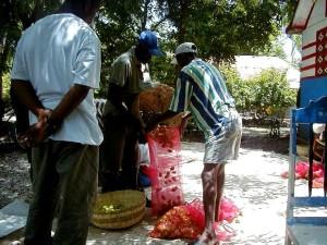 haitianisch, Bauern, Paket, Paprika, verkaufen, lokal, Markt