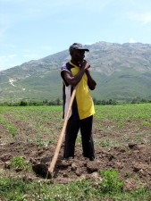 haitian, man, works, field