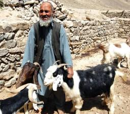Pastuch, Badakhshan, północnym Afganistanie, kozy
