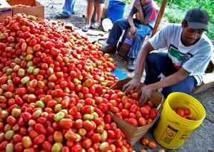 Honduras, rolnictwa, zróżnicowania, Asysta, wzrostu gospodarczego,