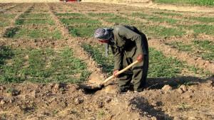 쿠르드어, 농부, 파고, 흙, 농장
