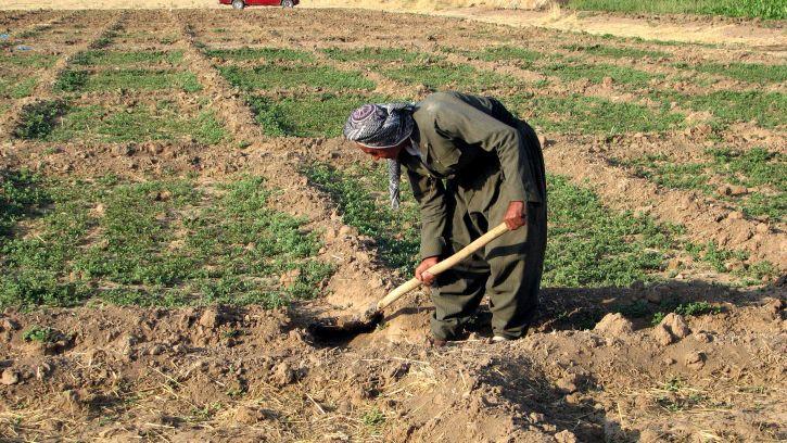 kurdish, farmer, digging, earth, farm